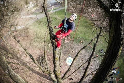 Diagnostyka drzew