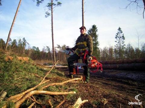 Wycinka drzew firmy gdańsk